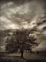 The Tree by jeremi12