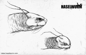 Haselwurm sketches I by dcf