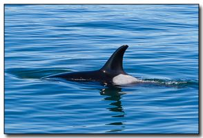 Orca 7055 by ricmerry