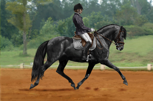 Friesian dressage by WhingedDreamingRose