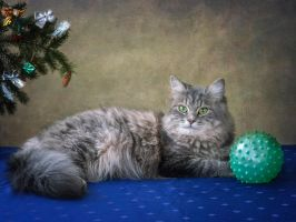 Photos under the Christmas tree by Daykiney