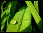 waterdrops. by s3r4x