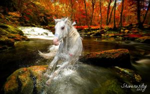 First Ever Photo Manipulation! by EquusInspiration