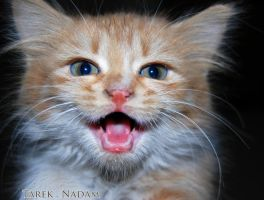 Cat 31 - Laughing by t1987n