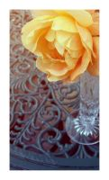 Yellow Rose by OMG-ImSoAwesome