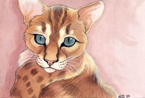 Ed- Bengal cat by Leona