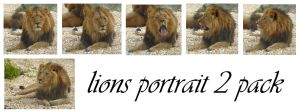 lion portrait 2 pack by syccas-stock