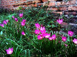 flowers near the brick wall by spade-wish