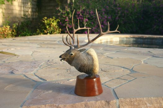 Elk Bust Wood Carving by Fishknots