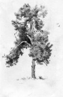 Tree sketch by Call0ps