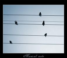 Musical notes by vikingexposure