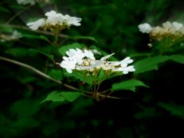 WHITE FAIRYS IN THE WOODS by trevj