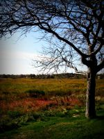 Dead Tree and the Field by ONGoingDrifter13