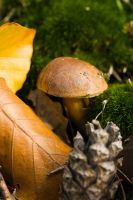 Still life with mushroom by duncan-blues