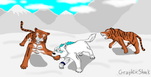 Wolf vs Tigers by Storm-Cwalker