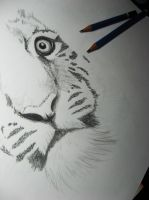 A Tiger WIP by Finihous