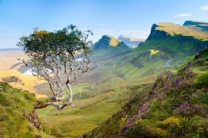 Quiraing Tree by Rentapest