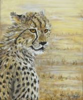 Cheetah study 2 by acrylicwildlife