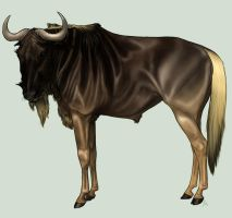 Wildebeest study by billygoatsgruff