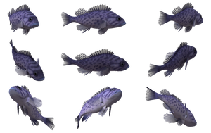 Fish Set 09 by Free-Stock-By-Wayne