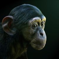 Portrait of a Baby Chimpanzee by JulieMavros