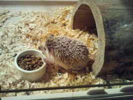 Miley hedgePIGGING Out by FayeleneFyre