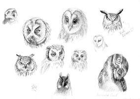 Owls by Redilion