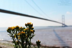 Thistle Under the Bridge by AndrewFletcher