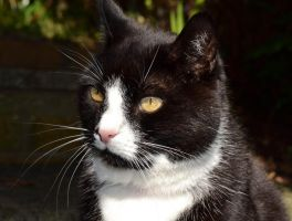 Handsome cat by Bushrch