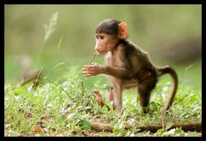 Little baboon by mahleu