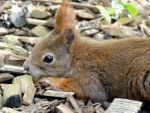 Stock Photo: cute squirrel by elisafox-stock