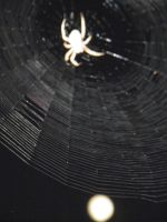 Spider and moon by bwall49