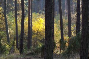 Forest 10 by Eiande
