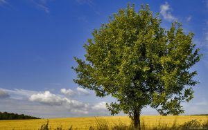 Summertree by drdrevil
