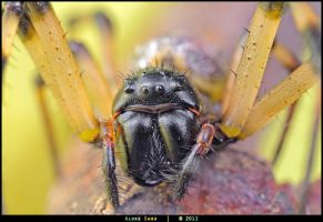 Unidentified Spider by alokethebloke