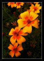 Marigold Chain by rosebud10