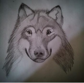 Wolf by JoeJFG