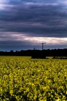 rapeseed before the storm by adamlack