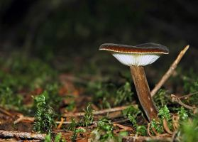 fungus 8 by LucieG-Stock