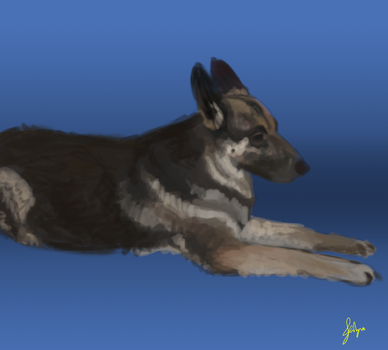 Cousin's dog Kira by hoenehd