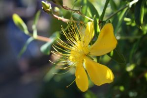 yellow flower 1053 by fa-stock