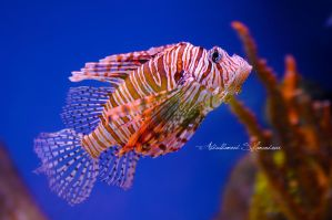 Colorful Fish by ashamandour