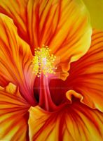 Hibiskus by GreenMusic