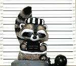Raccoon Mugshot by AshleyCharlene