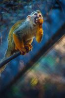 Squirrel Monkey Scavenger by servilonus