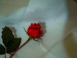 'A rose is red because it is coloured of passion' by Benedetta-R