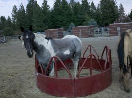 oreo in a round feeder by cocobeanc