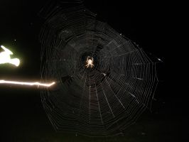HUGE SPIDER WEB by Mercy-Angel