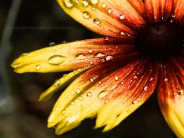 summer dew by wroquephotography