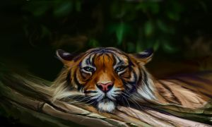 Tiger. 2 hours by SalamanDra-S